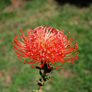 Caroline Flower