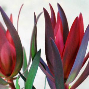Fireglow Flower