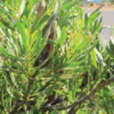 Cape Flora Agri Wetenskappe News
