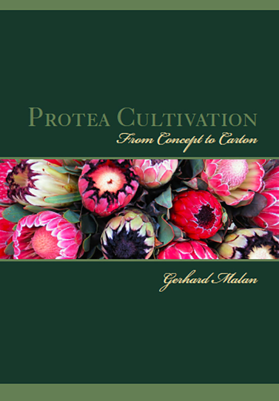 Protea Cultivation From Concept To Carton