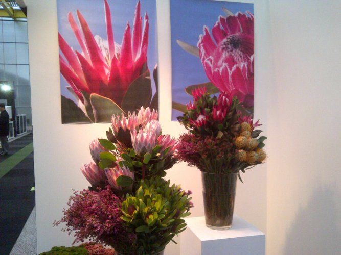 IFTF International Floriculture Trade Fair 2012 03
