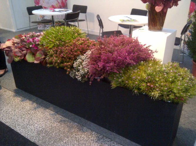 IFTF International Floriculture Trade Fair 2012 04