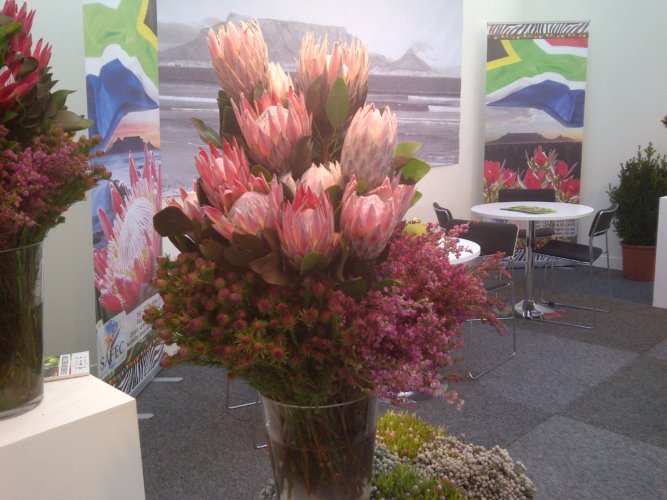 IFTF International Floriculture Trade Fair 2012 10 SAFEC Nederland