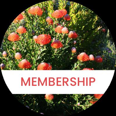 Membership2